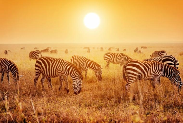 Sunset over the park plains of The Serengeti National Park