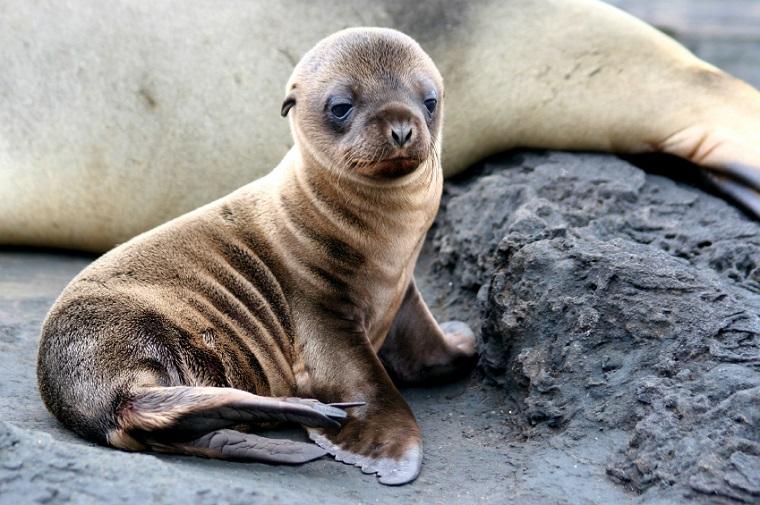 Galapagos Wildlife Photographs