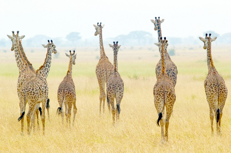 Africa Photographs