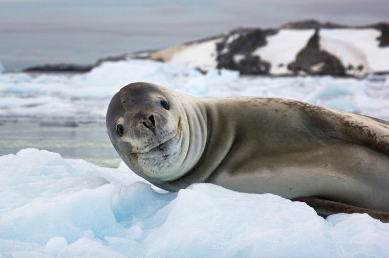 Photographs captured in Antarctica