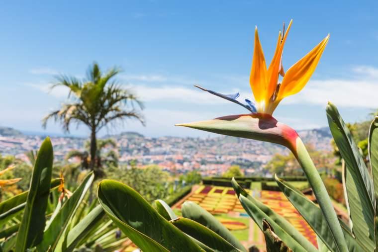 Botanical garden of Funchal at Madeira