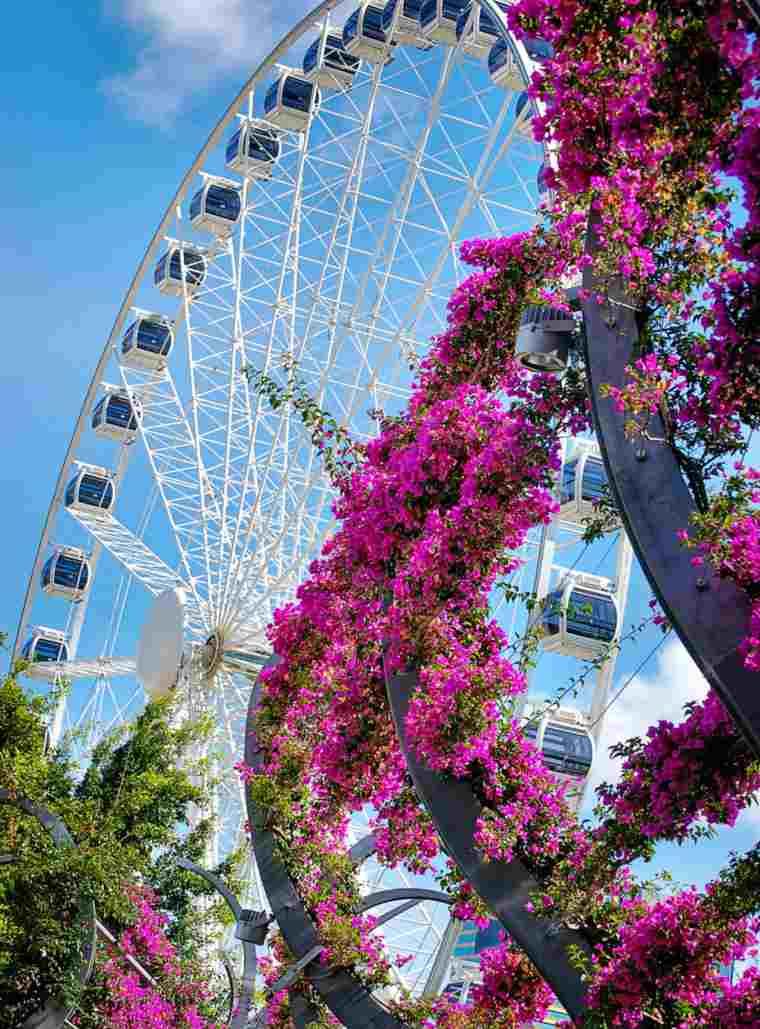 Brisbane Wheel at Southbank