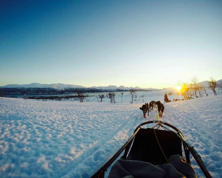 Dog sledding in Norway with Hurtigruten