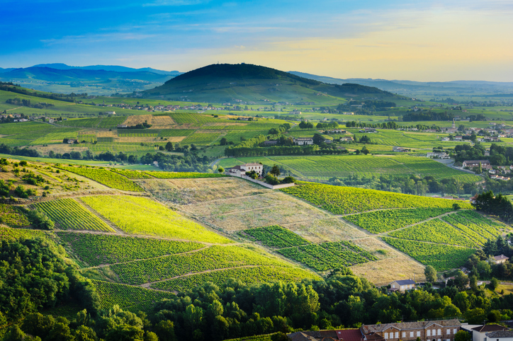 Brouilly hill and vineyards with morning lights in Beaujolais land, France