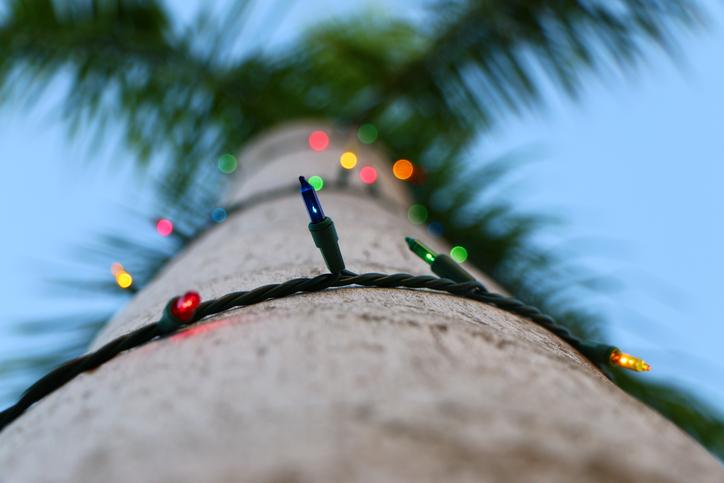 Christmas lights on a Palm Tree in St.Croix, U.S. Virgin Islands