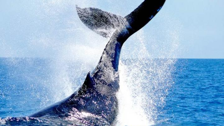 Marine Wildlife Charity ORCA To Join Fred Olsen's Summer 2021 Sailings