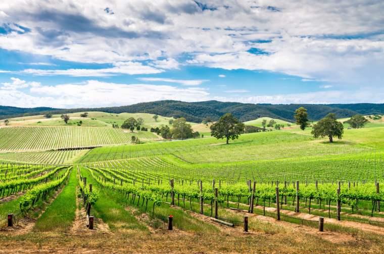 Wine valley in Barossa Valley
