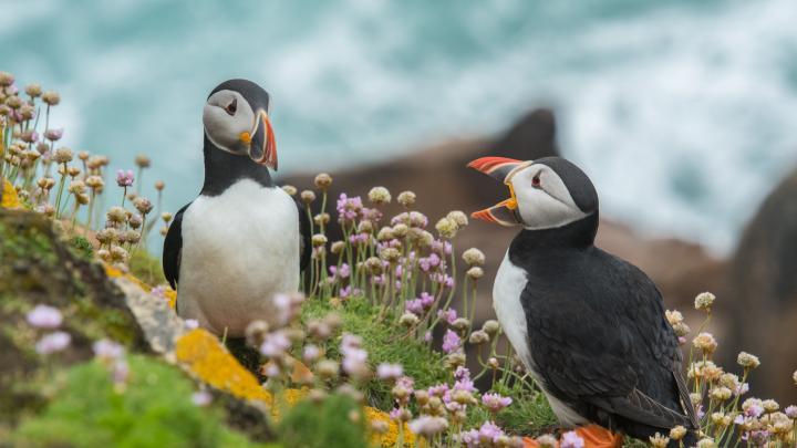 Wild Beauty: Summer Cruising in the British Isles