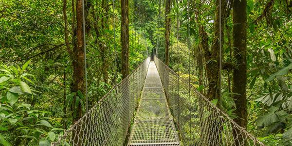 Cloud rainforest in Costa Rica